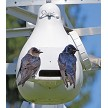 Purple Martin couple on the porch of their Troyer Vertical Gourd, Conley II entrance